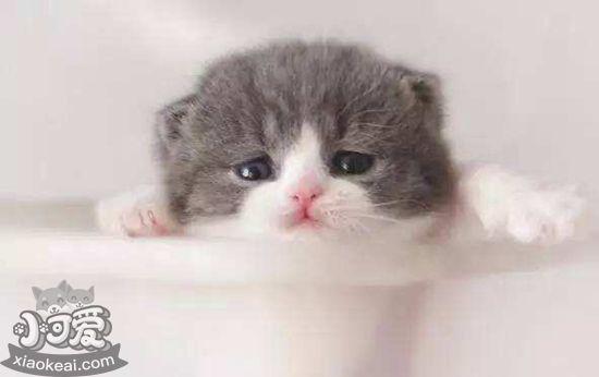 猫几个月算成年 猫咪多大时吃成年猫粮