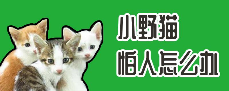 小野猫怕人怎么办