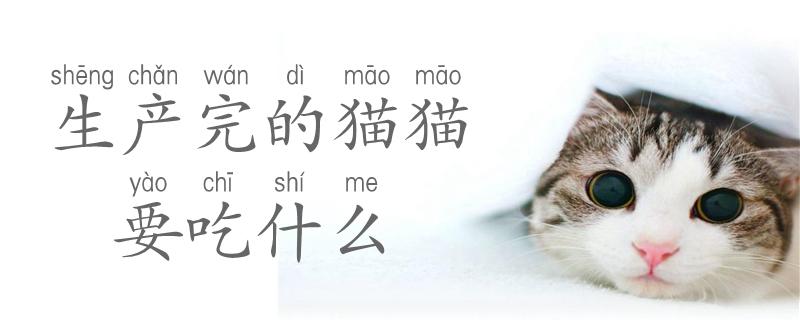 生产完的猫猫要吃什么