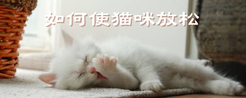 如何使猫咪放松