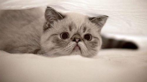 猫咪抑郁症的4大表现