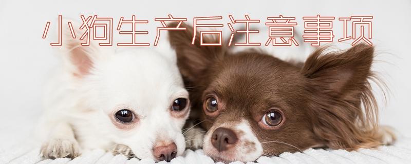 小狗生产后注意事项