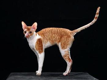 麒麟猫多少钱一只图片