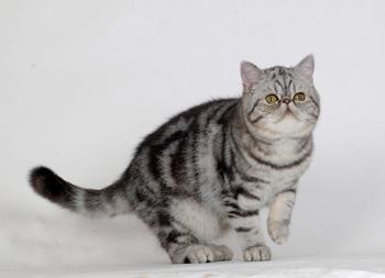 麒麟猫性格图片
