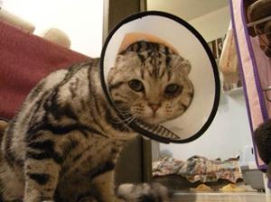 猫咪多大可以驱虫 猫咪驱虫时间介绍