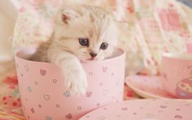 茶杯猫得了湿疹怎么办 茶杯猫得了湿疹治疗方法