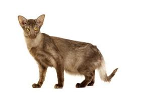 爪哇猫牙龈出血怎么办 爪哇猫牙龈出血解决办法