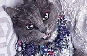 内华达猫跳蚤怎么消灭 跳蚤消灭方法