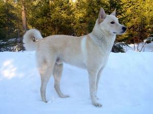 卡南犬感冒怎么办 卡南犬感冒治疗方法