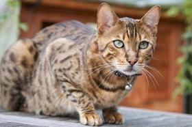 波米拉猫感染性腹泻如何治 感染性腹泻治疗方法