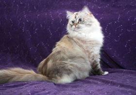 褴褛猫肠胃炎怎么办 褴褛猫肠胃炎治疗方法