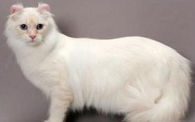 喜马拉雅猫骨折怎么办 猫咪骨折紧急处理办法