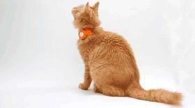 猫咪除蚤项圈好用吗 猫咪除蚤项圈作用介绍