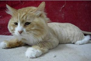 如何防止猫咪中暑 预防猫咪中暑小妙招