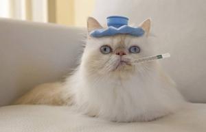 猫咪正常体温是多少 猫咪正常体温说明