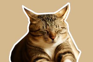 猫眼睛有眼屎怎么办