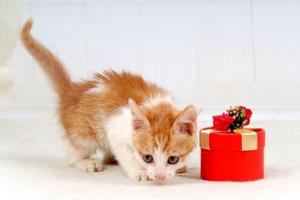 小猫出生后不会吃奶怎么办