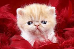 猫咪要如何护理