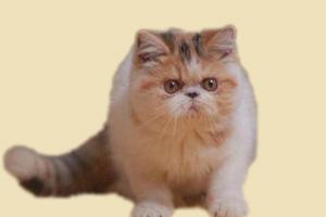 加菲猫什么时候做驱虫