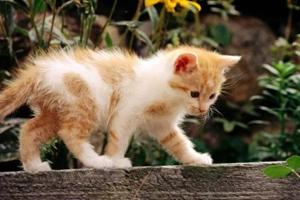 新生猫咪如何护理