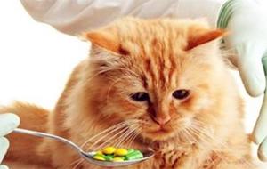 猫白血病临床症状介绍