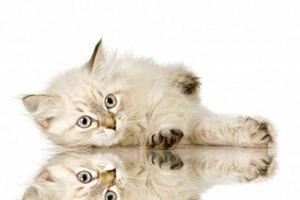 小猫出生后注意事项