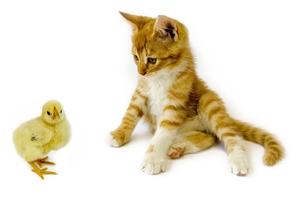 怎么样让小猫不叫