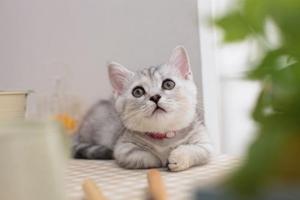 怎么样让小猫睡猫窝