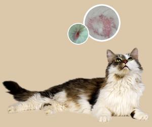 猫皮肤病症状有哪些