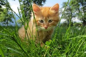 如何让猫咪在猫窝睡