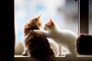 小猫出生后怎么看公母
